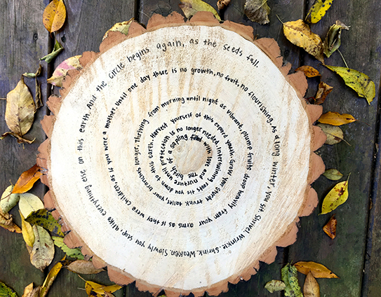 ecopoetics tree stump