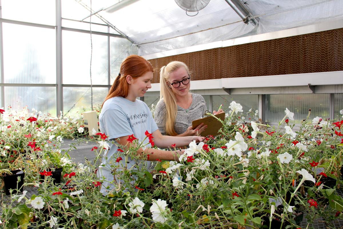 Students examining plants in greenhouse