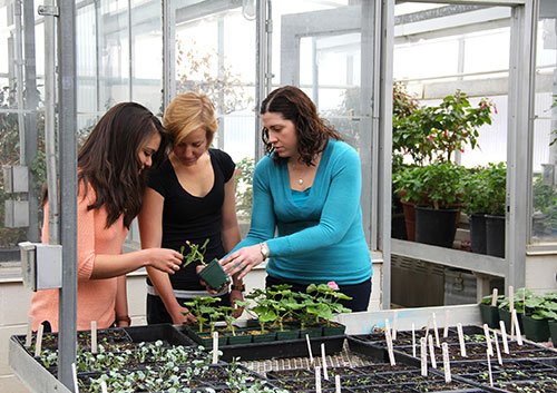 Cassie Majetic, assistant professor of biology, right, is pictured in the current greenhouse with her biology students Maria Jose Hernandez '14 and Carrie Dubeau '16. A new greenhouse (and headhouse) will be built this summer thanks to the campaign.